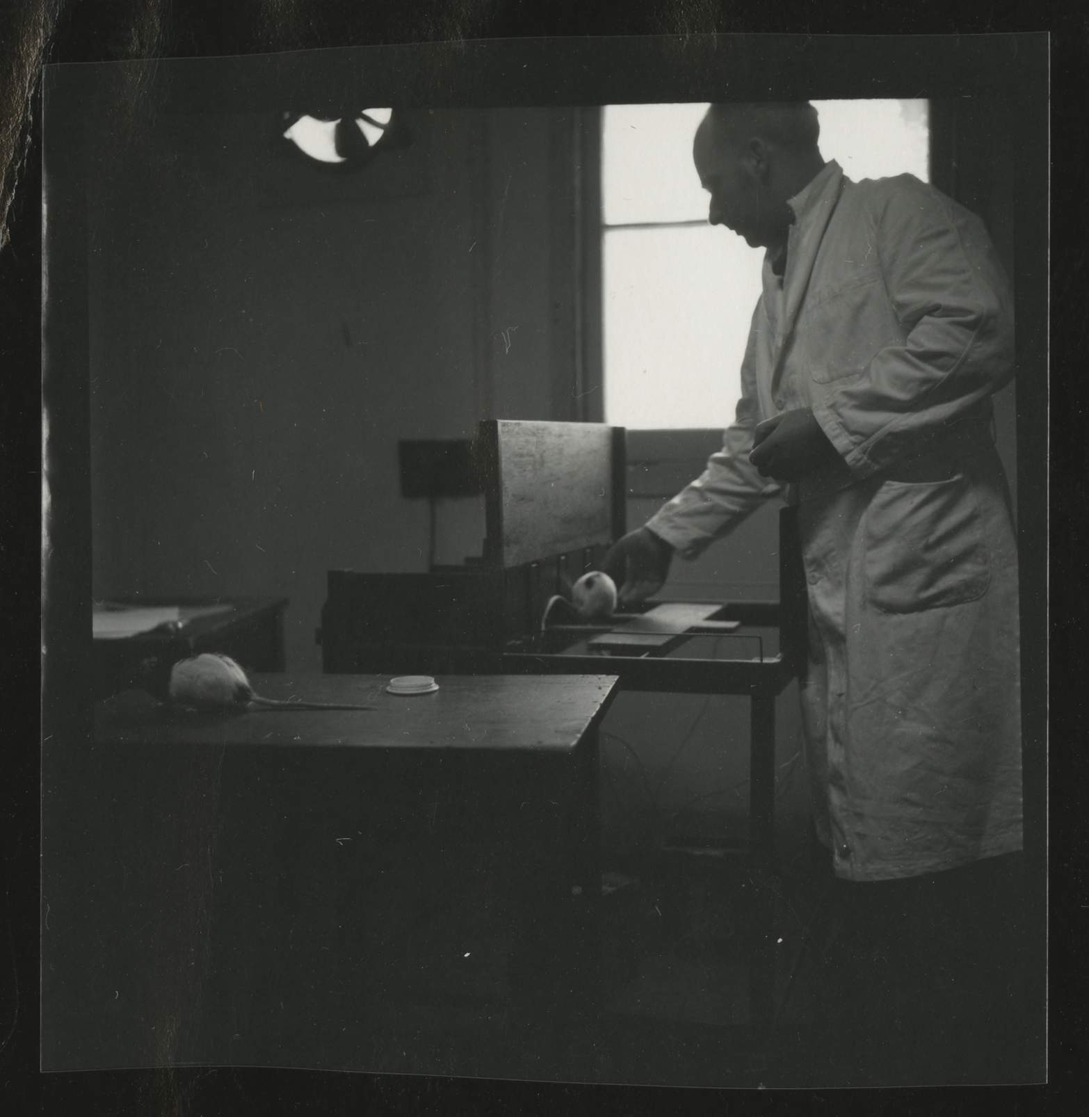 Man wearing laboratory coat with hooded rat, University of Melbourne Department of Psychology, 'Tin Hut' laboratory, Tin Alley