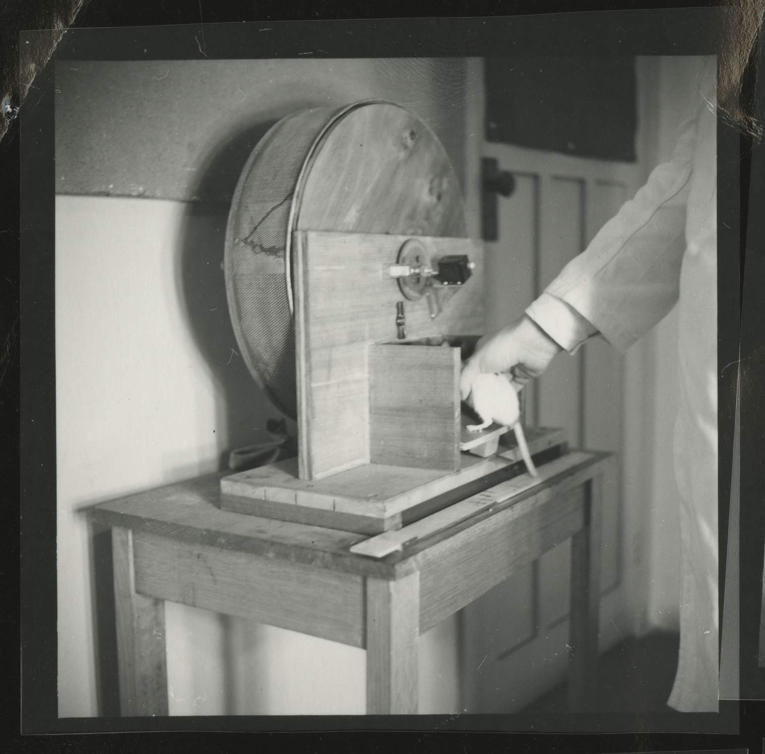 Hooded rat and laboratory equipment, University of Melbourne Department of Psychology, 'Tin Hut' laboratory, Tin Alley